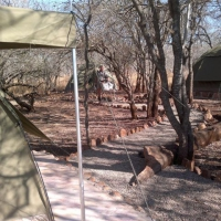 Shayamoyas tented bush camp 1.JPG